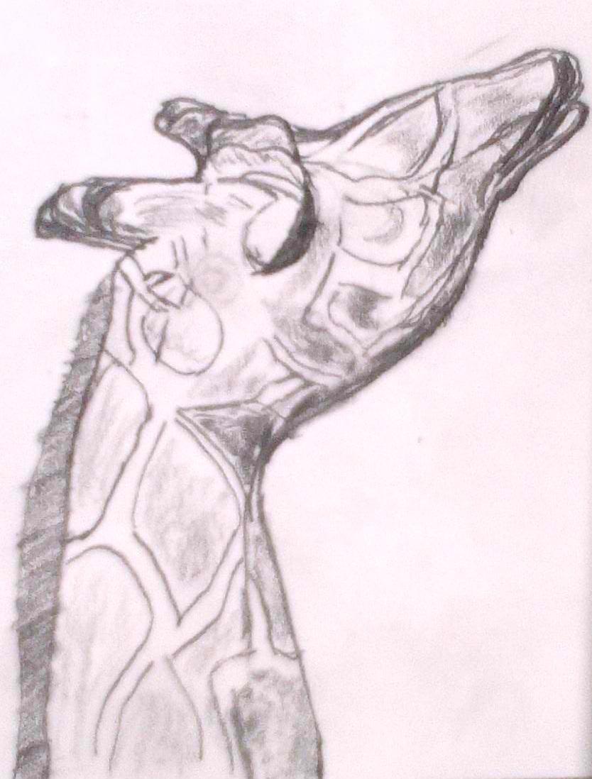 giraffe--joe hertvik--august 2014